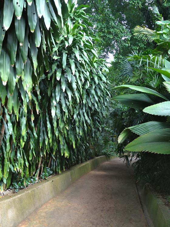 Creative Adventure at the Kuala Lompur Orchid Garden